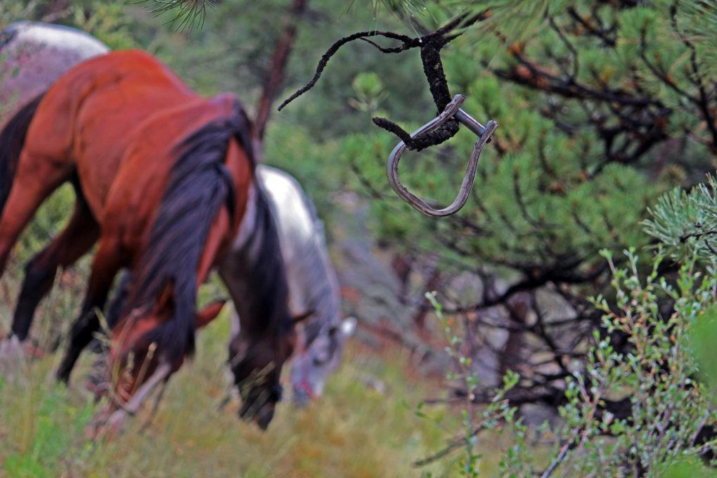 Horses on Colorado Trail grazing Segment 13