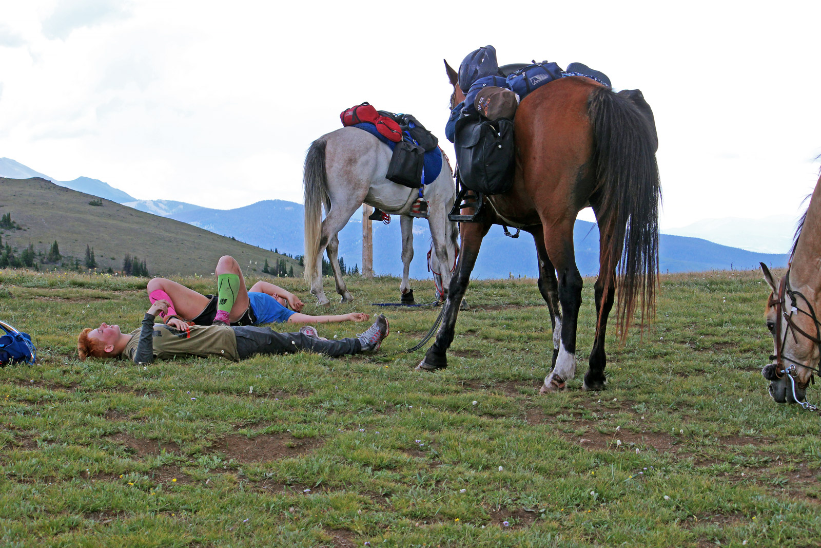 riding horses on the colorado trail