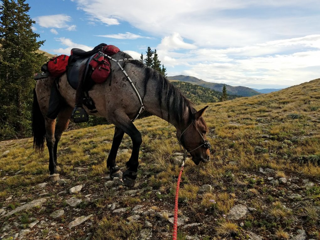 Colorado Trail Horses Segment 12