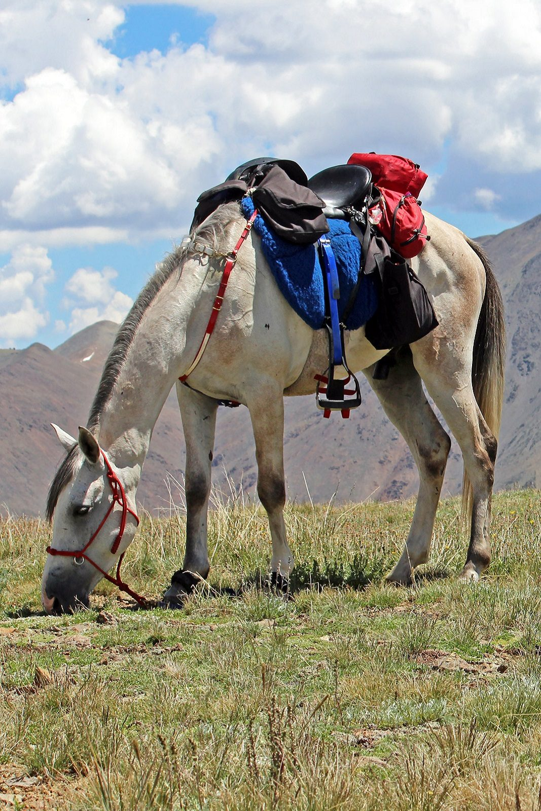 Zurkh grazing on Colorado Trail